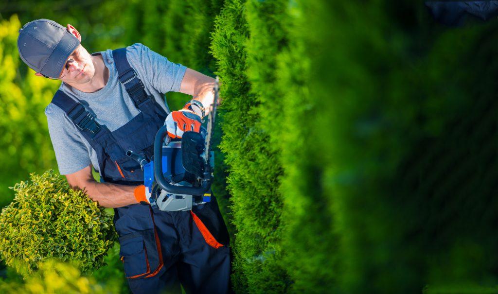 diseño de jardines y mantenimiento